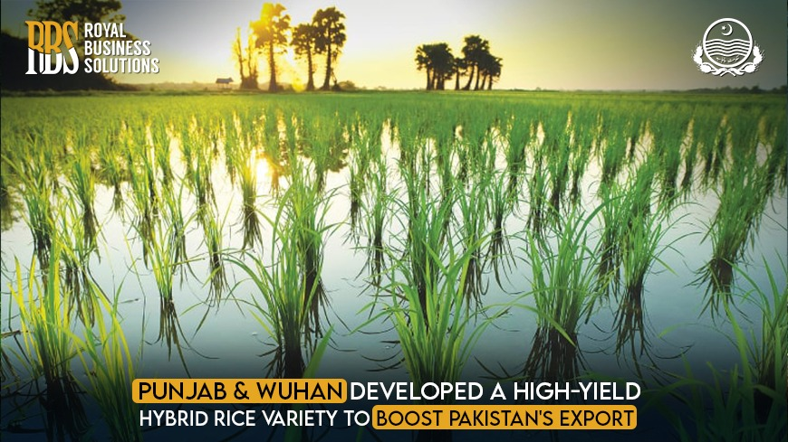 Punjab and Wuhan Developed a High-Yield Hybrid Rice variety to Boost Pakistan's Export